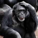 I credenti sono meno intelligenti degli atei